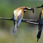 A madarak is képesek a logikus gondolkodásra