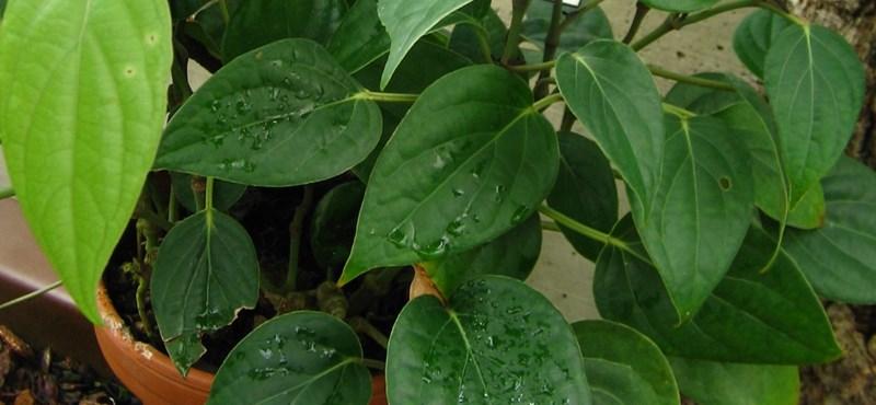 Nézzen csak körbe: milyen növényei vannak otthon? Lehet, hogy nagyon nem mindegy
