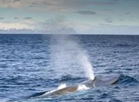 Volt pozitív hatása is a világjárványnak: elcsendesültek az óceánok