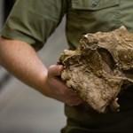 Tíz év után sikerült azonosítani a csonttüskés páncélú dinoszauruszt