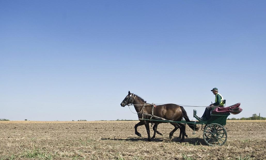 Kulik István halad lovas postakocsijával Gátér határában. Az ország egyetlen lovas postása a Bács-Kiskun megyei község körüli kiterjedt tanyavilágban látja el kézbesítői feladatait. - Hét képei - nagyítás