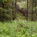 Megőrjítik a netet David Attenborough táncoló medvéi – videó