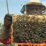 Csapadékra számítanak a méhészek