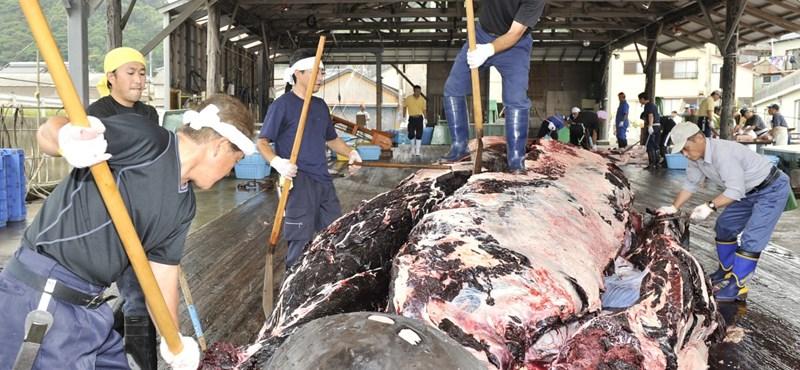 Újra bálnákat mészároltak le a japánok
