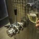 Közösségi gazdaság a tokaji borászatban is