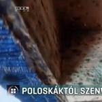 Poloskainvázió egy budapesti pszichiátrián: március végére végezhetnek az irtással