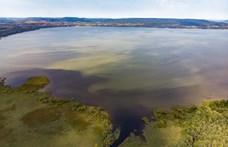 Világszerte egyre súlyosabb a nyári algavirágzás az édesvízi tavakban
