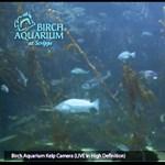 A világ egyik legnagyobb akváriuma előtt állhat egész nap
