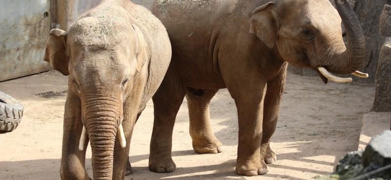 Méhzümmögéssel tartják távol az elefántokat a vasúti sínektől Indiában
