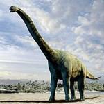 A termálforrások dinoszaurusz-inkubátorok voltak