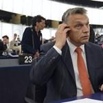 Orbán hátradőlhet: a kutyát sem érdekli a Tavares-jelentés