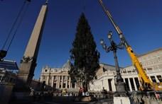 Szlovéniából érkezett a Vatikán idei karácsonyfája