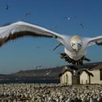 A nap képe: Angry birds