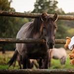 Maci és lovacska: így működik a gyermek-pszichoterápia
