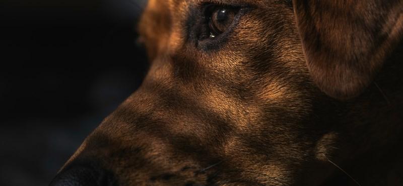 Megnyalta a kutyája, nem sokkal később belehalt