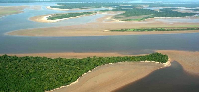 Kipusztulhatnak a halak az Amazonasból a gátak miatt