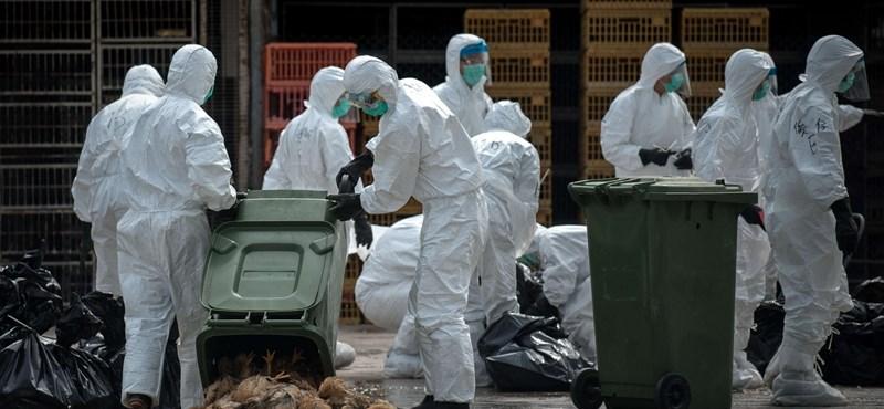 Madárinfluenza: újabb fájdalmas pusztításba kezdtek, most Abádszalókon