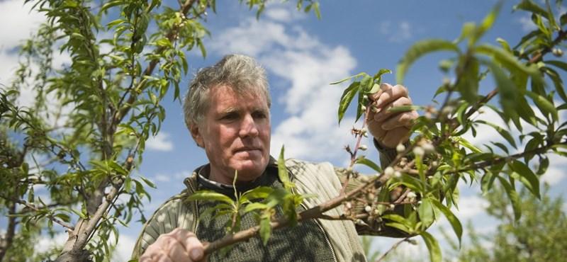 Állami segítséget kapnak a gazdák a májusi fagykárok miatt