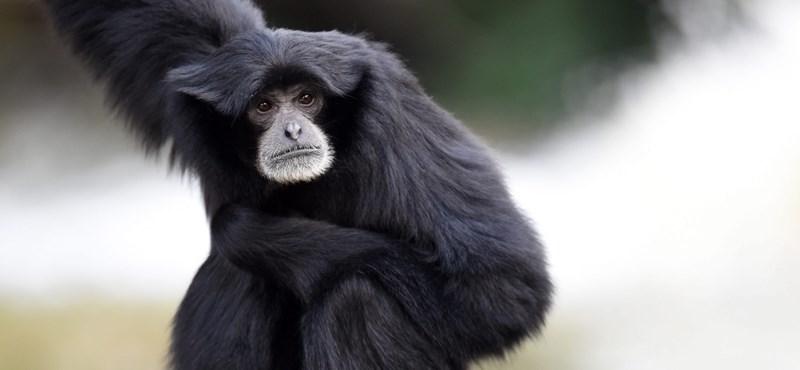Elment Finita, nagy veszteség érte a Nyíregyházi Állatparkot