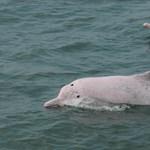 Rengeteg tengeri állat pusztul el zacskók és műanyagcsomagolások miatt