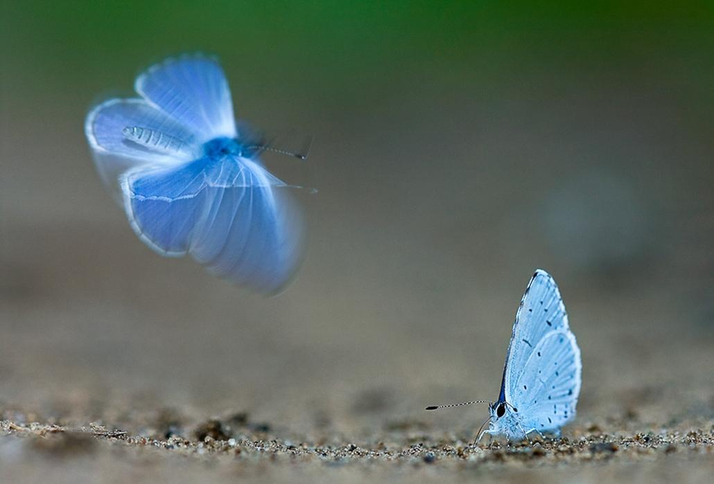 GDF SUEZ, az év természetfotósa 2012