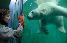 Európa legjobbjai között a budapesti állatkert