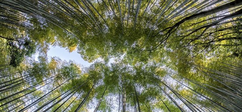 Ez zseniális: a Fülöp-szigeteken minden diáknak 10 fát kell elültetnie ahhoz, hogy végezzen az iskolában