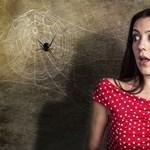Arachnofóbia? Valójában nem is félünk a pókoktól