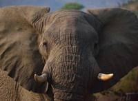 Hófürdőző cirkuszi elefántok szórakoztatták az orosz járókelőket