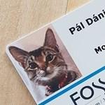 Imádja az internet a magyar macskát, aki egy izlandi hotel hivatásos egérfogója