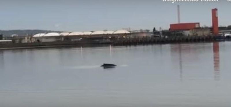 Feltűnt egy bálna Londonnál a Temzében (videó)
