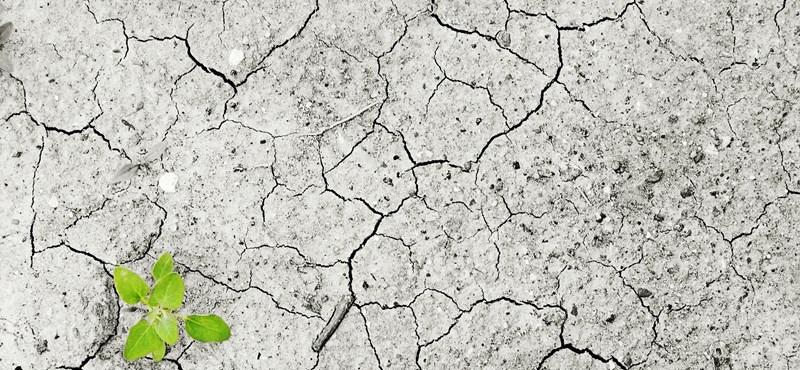 Klímaváltozás helyett használjuk azt, hogy klímaválság – követeli egy szervezet