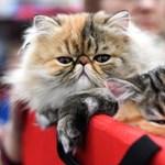 Filmre viszik a Macskákat, ezek a sztárok játszanának benne