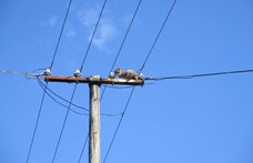 A villanyszerelők hozták le a kétségbeesett macskát a hétméteres villanyoszlopról Békéscsabán