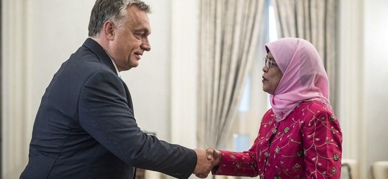 Orchideát neveznek el Orbán Viktorról
