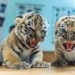 Meghívta a polgármester a veszprémi állatkertbe a fogyatékkal élőket, akik nem kaptak kedvezményes jegyet