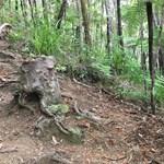 Bizonyították: a fák nem hagyják meghalni egymást