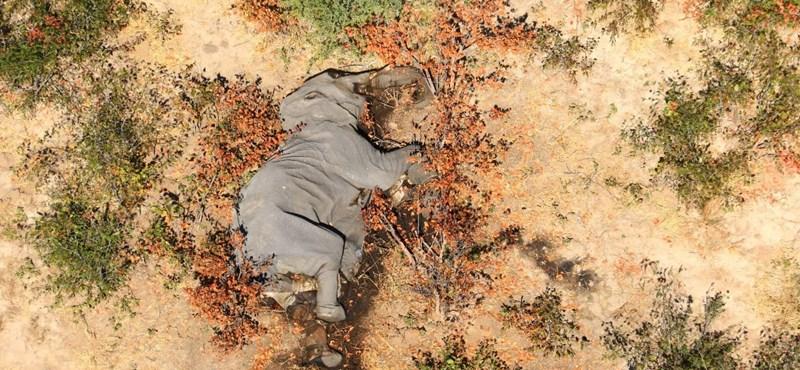 Újabb rejtélyes elefánttetemeket találtak Botswanában