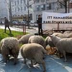 Bárányokkal és kecskékkel ostromolta Rogánt az Együtt-PM