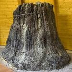 A Pannon-tenger Múzeumba kerülhetnek a bükkábrányi ősfák