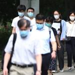 Koronavírusra tesztelik az étlapokon is megtalálható denevéreket Thaiföldön