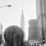 Elefántok sétálnak Manhattanben - íme a hét fotója