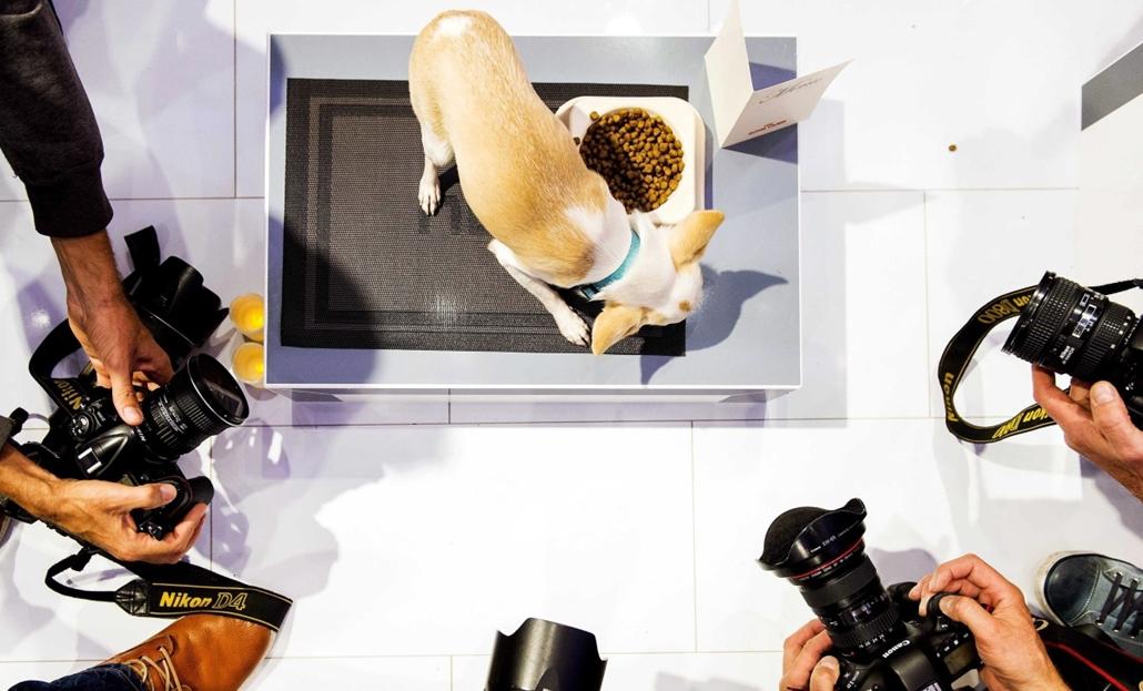afp. hét képei - Állati étterem Hollandiában, Amnszetrdam 2014.09.30. Egy kutya lakmározik az első, kifejezetten kutyák és macskák részére kialakított hollandiai étterem megnyitóján Amszterdamban 2014. szeptember 30-án.