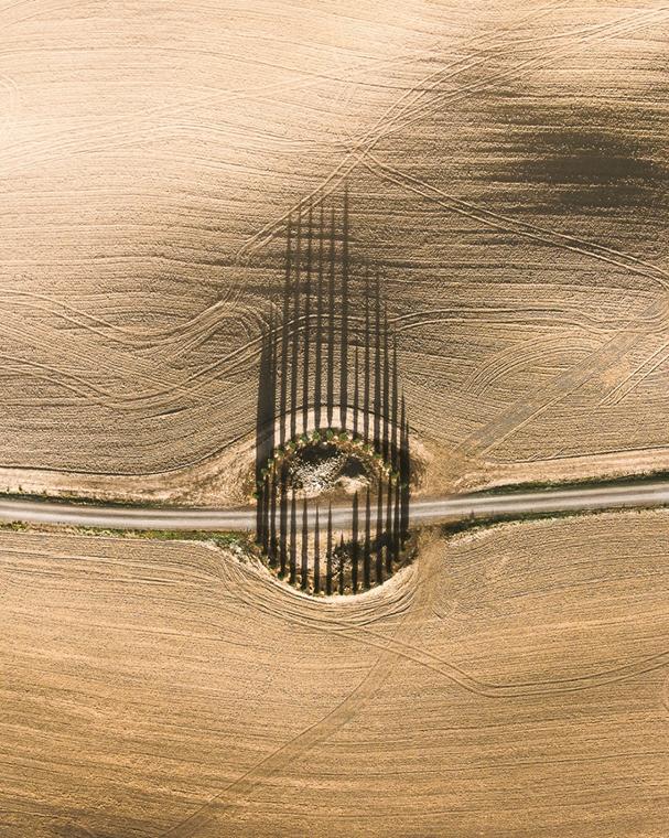 e! - drónfotópályázat Toszkánai ciprusfák