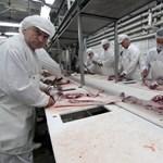 A pápai húsgyárnak kampec
