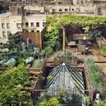 Friss paradicsom, fűszerek és vadiúj barátok – ezt (is) adják a közösségi kertek
