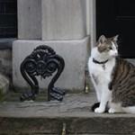 Macska a Downing Streeten: tíz éve lépett hivatalba Larry, a miniszterelnökségi főegerész