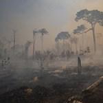 WWF: Az életmódunkat is meg kell változtatni, hogy megakadályozzuk fajok kihalását