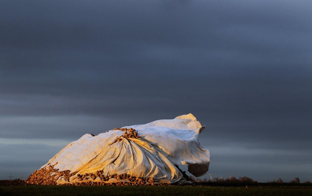 afp. szél, szeles, időjárás, nagyítás - Seligenstadt, Németország, vászonborítás, cukorrépa 2013.12.09.