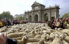 Birkafelvonulás Madridban